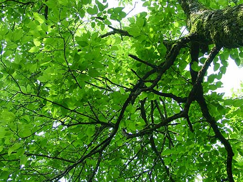 飛騨の木々